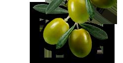 fruto olivo